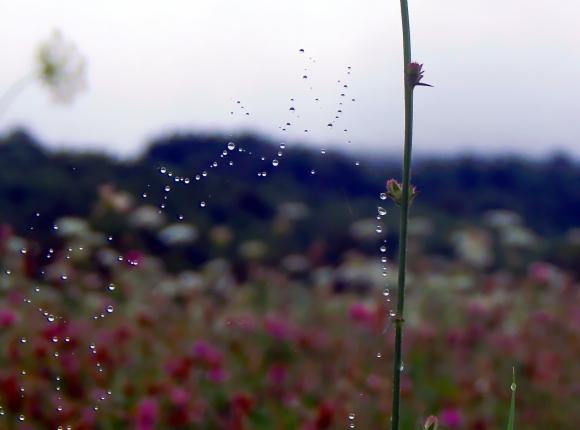 curtain_of_rain_by_smbaird-d7tcu2r