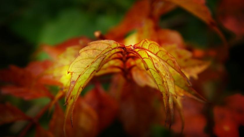 autumn_spectrum_by_smbaird-d7z6spc (1)