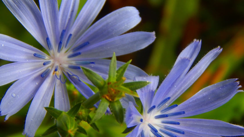 blue_on_a_gray_day_by_smbaird-d7tei7w