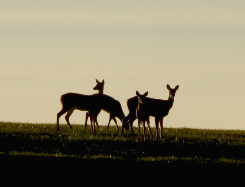 oh_deer_by_smbaird-d7er3as