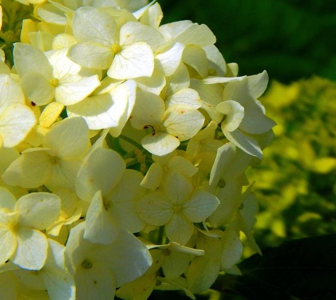 petals_by_smbaird-d7m8uzk