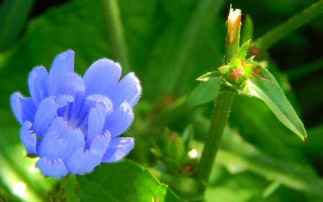 blue_day_by_smbaird-d7qccct (1)
