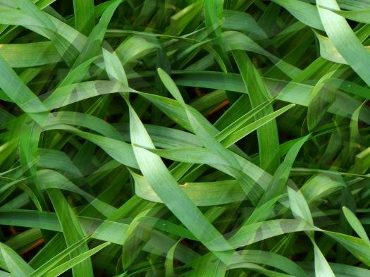 green_weaver_by_smbaird-d7j8ny0