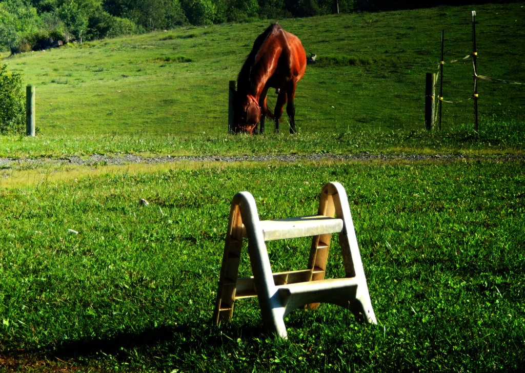 one_horse_mower_by_smbaird-d7sjtwa