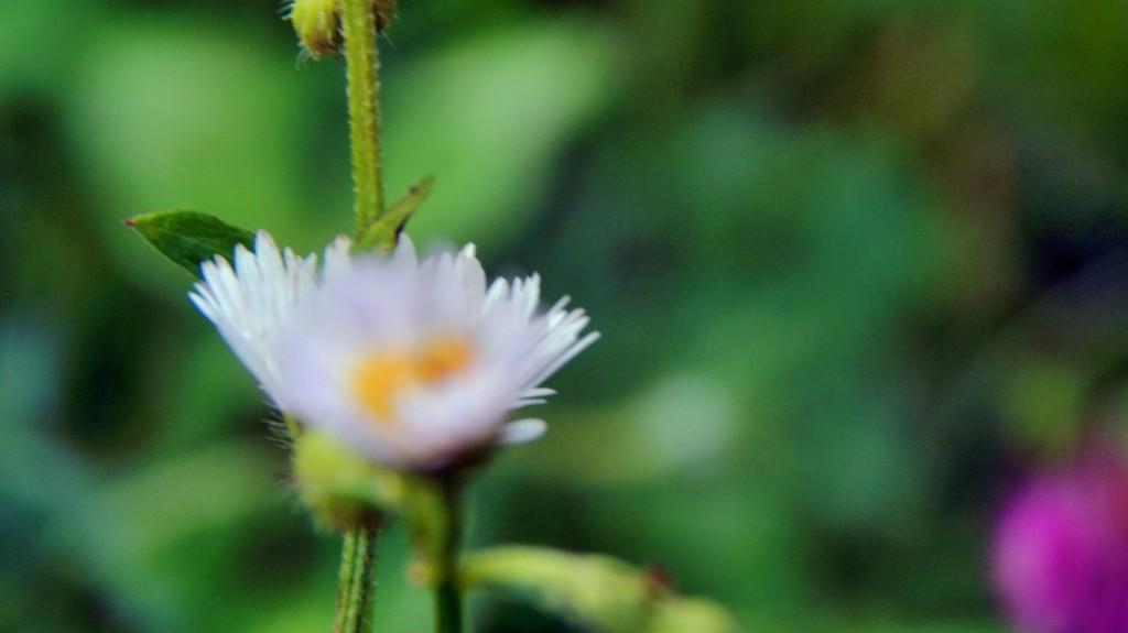 shy_little_daisy_by_smbaird-d7t4xpz
