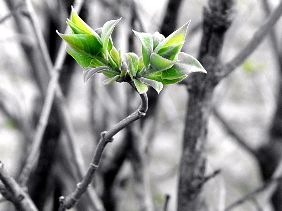 the_greening_by_smbaird-d7ct58o