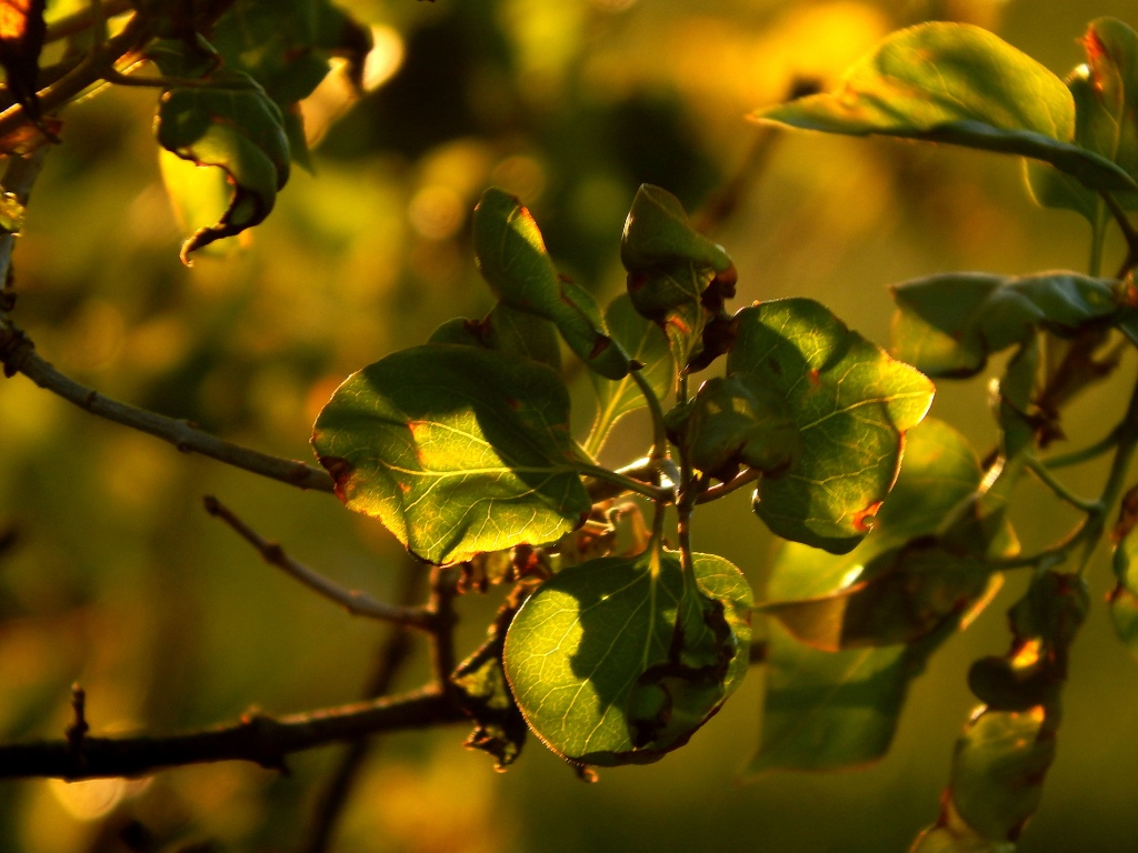 an_abundance_of_greens_and_golds_by_smbaird-d7fptg8