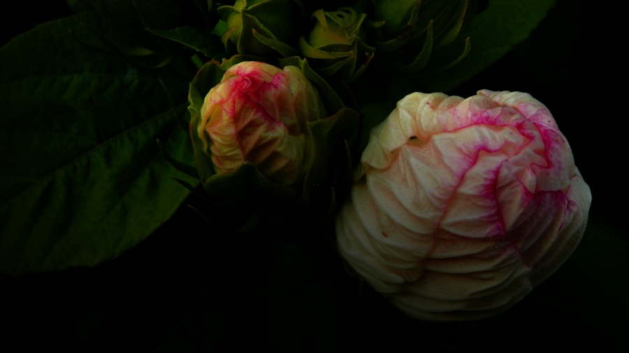 dark_bloom_by_smbaird-d7tup09