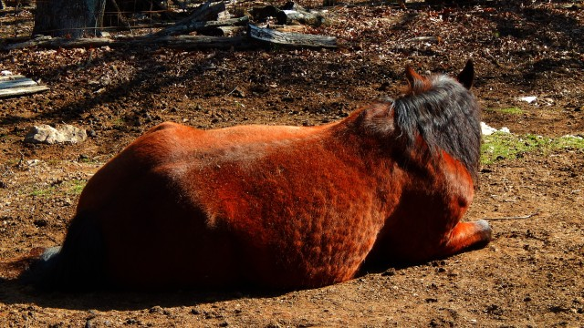 Dusty resting pony