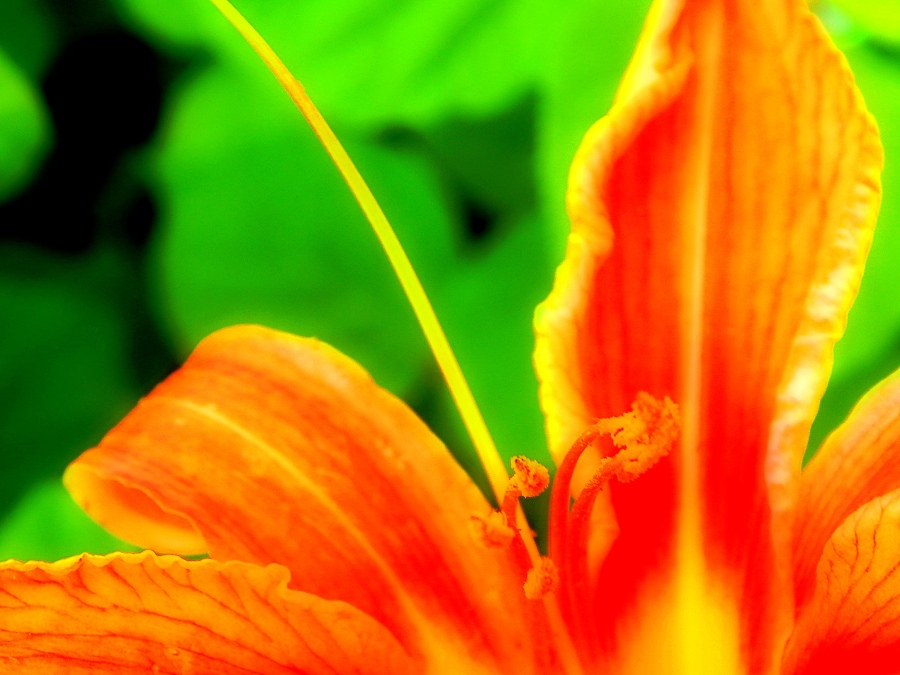 orange_you_glad_by_smbaird-d7luqvt