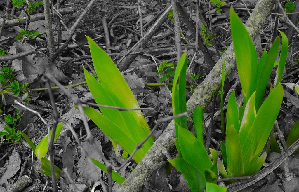 spring blades