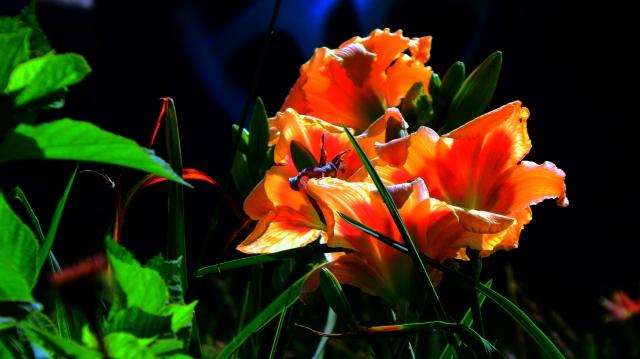 summer_flourish_by_smbaird-d7ovzfw