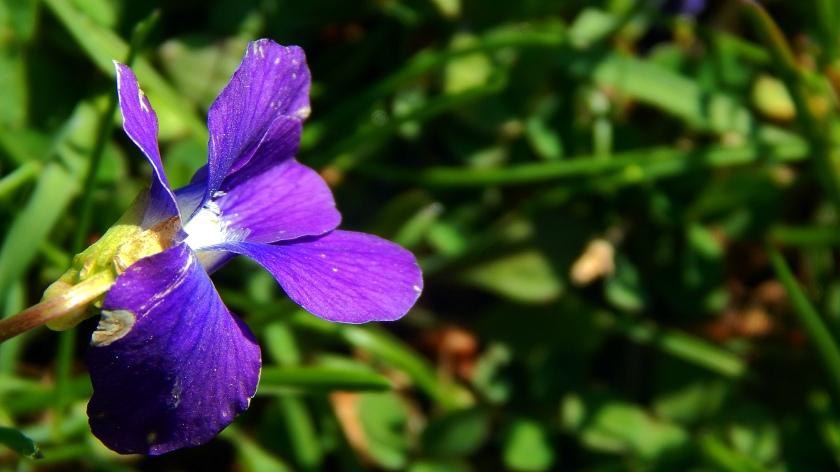 scrappy purple