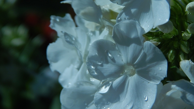 A bluer shade of pale