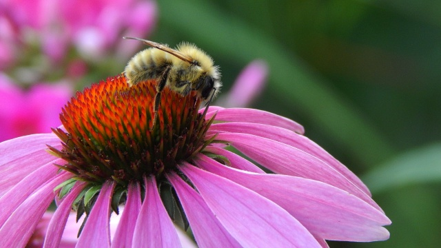 Let sleeping bees lie