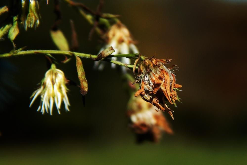 summer_bones_by_smbaird-d81r8bx (1)