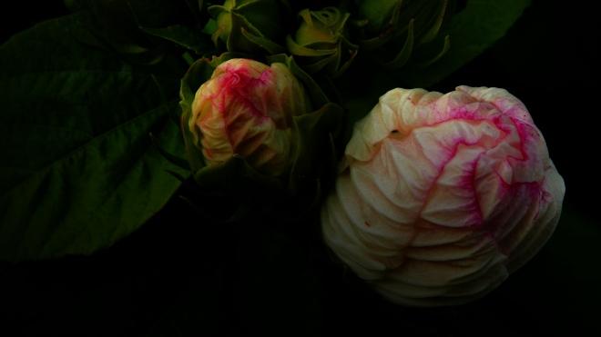 dark bloom