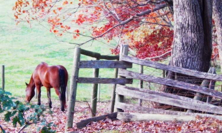 pastoral horse