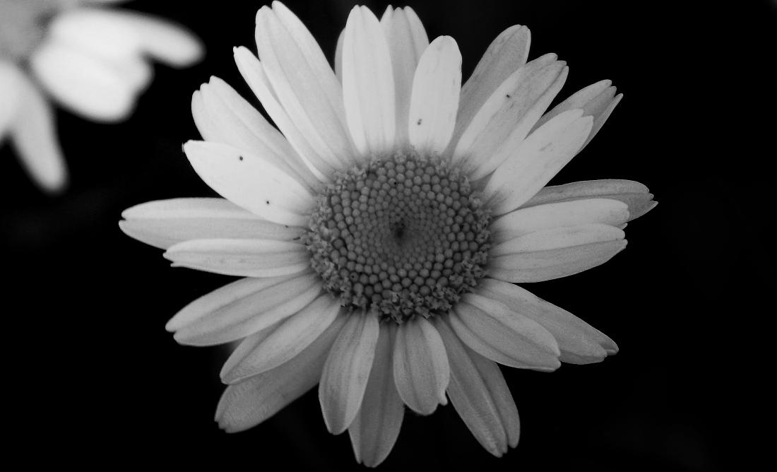 white_shade_by_smbaird-d7otfwb