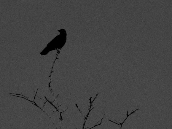 the watcher2
