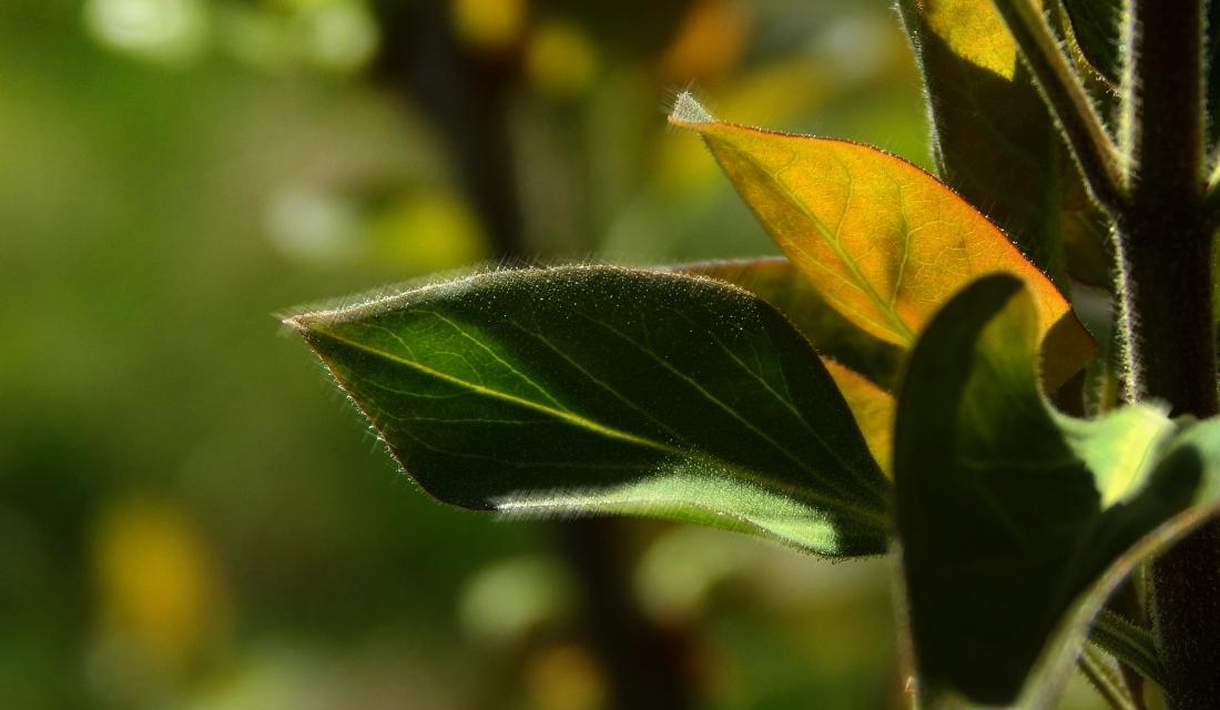 april silk